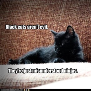 Black cats aren't evil.
