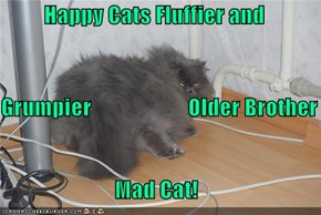 Happy Cats Fluffier and  Grumpier                      Older Brother Mad Cat!