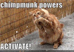 chimpmunk powers  ACTIVATE!