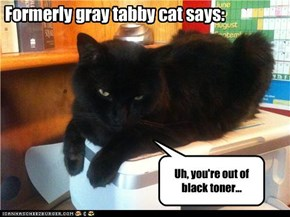 Formerly gray tabby cat says: