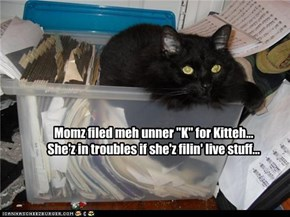 "Momz filed meh unner ""K"" for Kitteh... She'z in troubles if she'z filin' live stuff..."