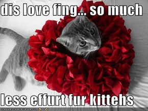 dis love fing... so much   less effurt fur kittehs