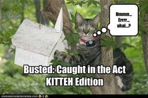 Busted: Caught in the Act KITTEH Edition