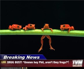 Breaking News - DRUG BUST! *Ummm hey Phil, aren't they frogs?*