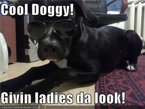 Cool Doggy!  Givin ladies da look!