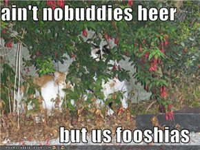 ain't nobuddies heer  but us fooshias