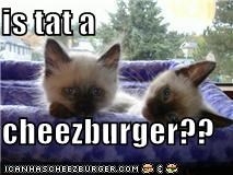 is tat a  cheezburger??