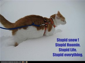 Stupid snow ! Stupid Hoomin. Stupid Life.   Stupid everything.