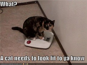 What?  A cat needs to look fit to ya know