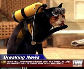 Breaking News - TRUTH FINALLY DISCOVERED!!! KITTEHS DON'T HATE WATER...AT LEAST NOT WHEN IT'S LOBSTER SEASON! MORE PICS AT ELEBENTY!!!!!