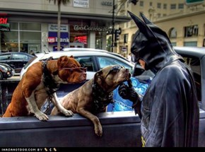 Even Batman Has a Soft Spot for Goggies