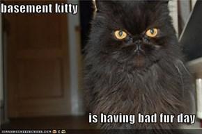 basement kitty  is having bad fur day