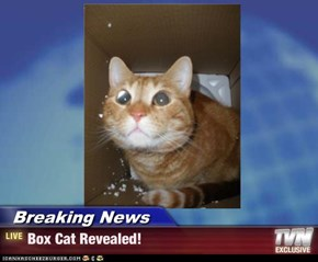 Breaking News - Box Cat Revealed!