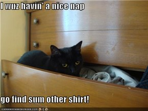 I wuz havin' a nice nap  go find sum other shirt!