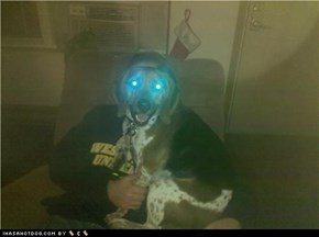 Laser dog..Locked and Loaded