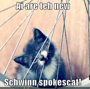 Ai are teh new   Schwinn spokescat!