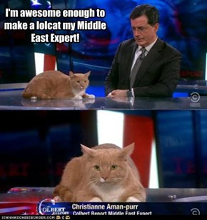 Colbert's Senior lolcat Middle East Correspondent
