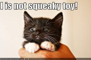 I is not squeaky toy!