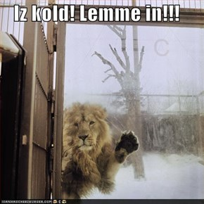 Iz kold! Lemme in!!!