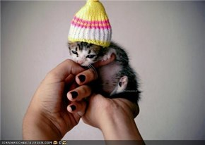 Cyoot Kitteh of teh Day: Teh Kat in teh Hat