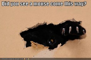 Did you see a mouse come this way?