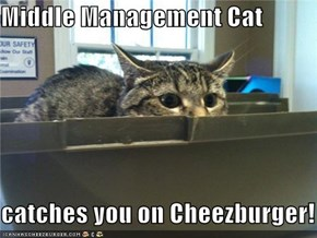 Middle Management Cat  catches you on Cheezburger!