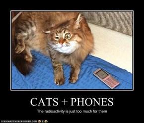 CATS + PHONES
