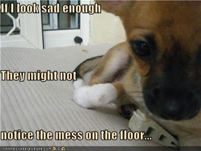 If I look sad enough They might not  notice the mess on the floor...