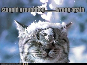 stoopid groundhog...........wrong again