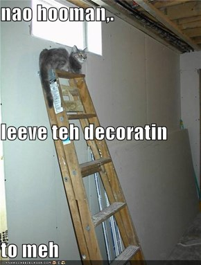 nao hooman,. leeve teh decoratin to meh