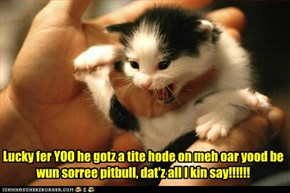 Lucky fer YOO he gotz a tite hode on meh oar yood be wun sorree pitbull, dat'z all I kin say!!!!!!