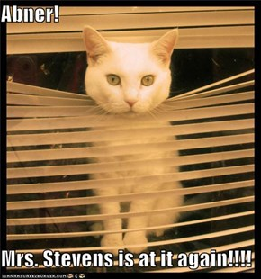 Abner!  Mrs. Stevens is at it again!!!!
