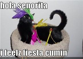 hola senorita  i feelz fiesta cumin