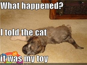 What happened? I told the cat it was my toy