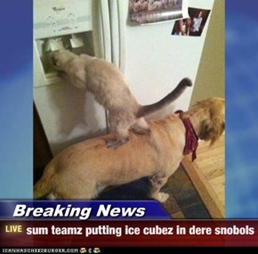 Breaking News - sum teamz putting ice cubez in dere snobols
