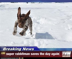 Breaking News - super rabbitman saves the day again