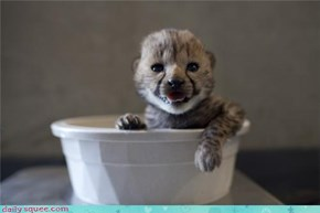Daily Squee: Just Drink Me Up!