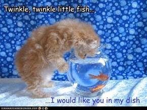 Kitty Wish