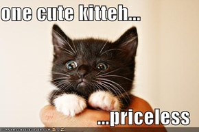 one cute kitteh...  ...priceless