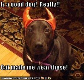 Iz a good dog!  Really!!  Cat made me wear these!