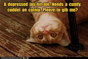 A  depressed  jus  hit  me.  Needs  a  cumfy,  cuddel  an  catnip.  Pleeze  tu  gib  me?
