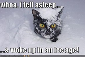 whoa. i fell asleep...  ...& woke up in an ice age!