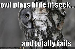 owl plays hide n' seek...  and totally fails
