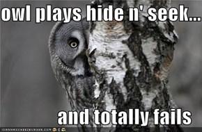 owl plays hide n' seek...  and totally fails