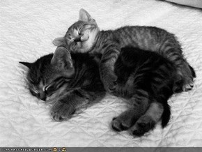Cyoot Kittehs of teh Day: Ai Lubs Bein teh Big Spoon!