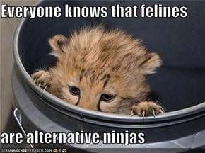 Everyone knows that felines  are alternative ninjas