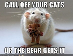 CALL OFF YOUR CATS  OR THE BEAR GETS IT
