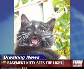 Breaking News - BASEMENT KITTY SEES THE LIGHT.