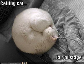 Ceiling cat...  ...larval stage