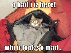 o hai! i iz here!  whi u look so mad...